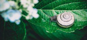 Elogio alla lentezza - 27 giugno - Officina della Scrittura